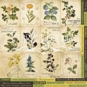 Лист бумаги для скрапбукинга Фабрика Декора BOTANY SUMMER 30х30см карточки