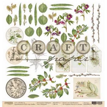 Лист бумаги для скрапбукинга CraftPaper НАХОДКИ коллекция Гербарий 30х30см