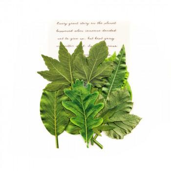 Набор листьев Prima Marketing RAINER LEAVES