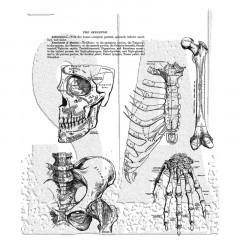 Набор резиновых штампов Tim Holtz ANATOMY CHART